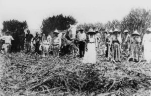 Australian Slave Traders Drowned Slaves Rather Than Give Them Freedom