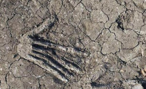 Scary Archaeology Finds, The Pits Of Severed Hands in Ancient Egypt Palace
