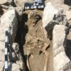 13th century skeleton discovered with oldest known form of maternal infection