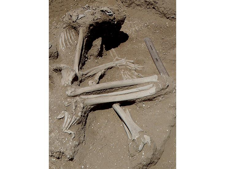 This female skeleton was found reclining on her left elbow, with fractures on the knees and possibly the left foot. The position of the hands suggests her wrists may have been bound. a