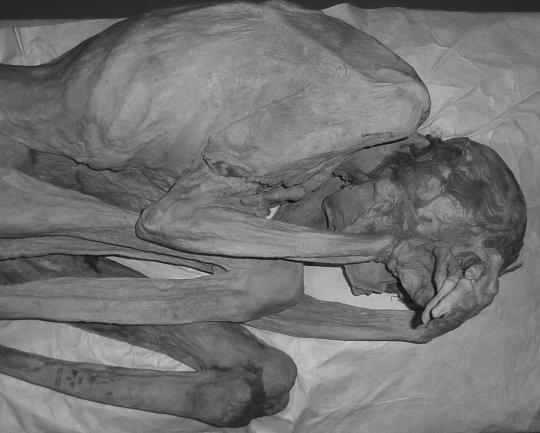 World's oldest tattooed woman is an Egyptian Mummy