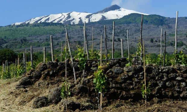Traces of 6,000-year-old wine discovered in italy