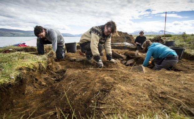 Archaeologists at work in Dysnes Boar buryals are quite uncommon in Iceland