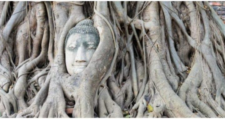 The head of a Buddha hiding inside a tree in Thailand continues to amaze