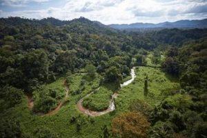 The dense jungle of Honduras.