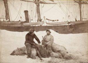 Fridtjof Nansen (left) and Captain Axel Krefting, sitting on just shot polar bear with the Viking in the background