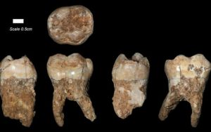 The teeth found at Qesem Cave outside of Tel Aviv
