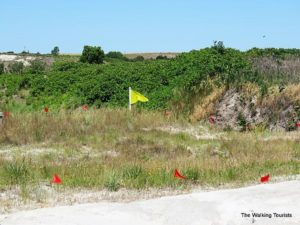 A yellow flag marks the site of the first skull discovery in 1971. The red flags indicate spots of additional fossil finds.