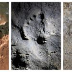 Researchers found a total of 180 human footprints and traces that were made about 14,000 years ago in a cave in northern Italy. Here are three of the footprints, made on different surfaces within the cave.