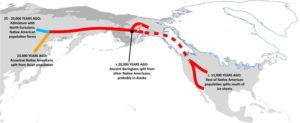 The Bering Strait migration pattern Crawford thought his ancestors took to get here. The DNA test indicated otherwise.