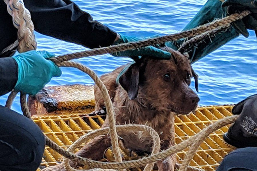 The dog was named Boonrod, or Survivor, by the rescuing oil rig workers.