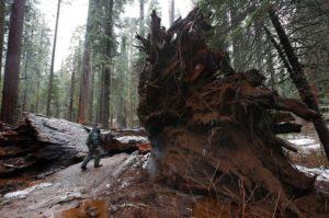Tony Tealdi, a California state park ranger