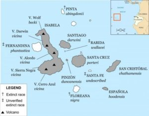 Galápagos archipelago annotated with ranges of currently recognised species of Galápagos tortoise, islands with surviving species are shaded.