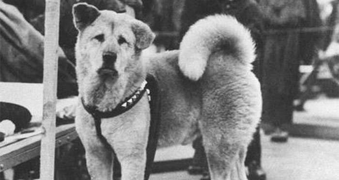 The Sad and Heartwarming Story of the World's Most Loyal Dog