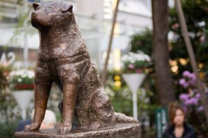Hachiko bronze statue just outside Shibuya train station.