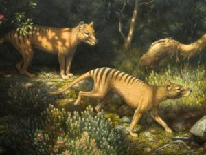 William T. Cooper's extraordinary 2006 painting, Thylacine, depicting a pair of Tasmanian tigers.