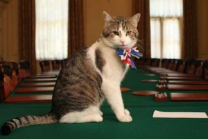 Larry, the Downing Street cat, gets in the royal wedding spirit in a Union flag bow-tie before the wedding of the Duke and Duchess of Cambridge.
