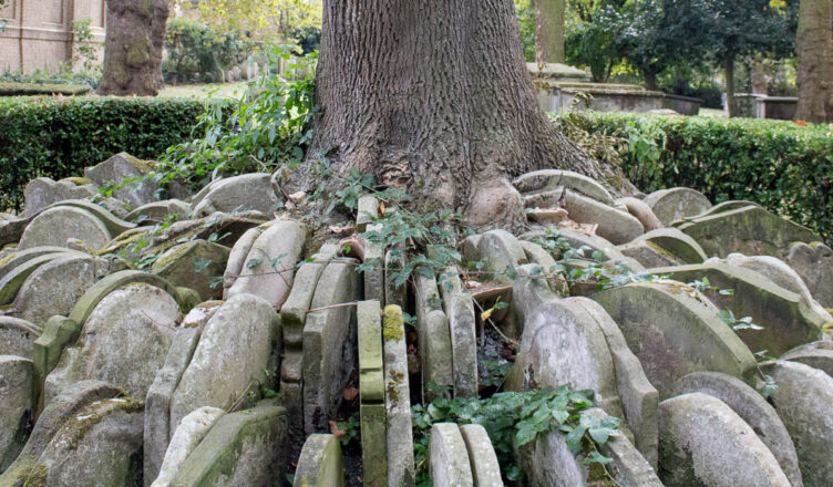 An ancient London churchyard, an ash tree is encircled with hundreds of overlapping gravestones.
