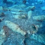 Undisturbed 2,000-Year-Old Roman Shipwreck Discovered In Cyprus