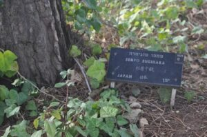 "Chiune ""Sempo"" Sugihara's plaque in the garden at Yad Vashem, Jerusalem."