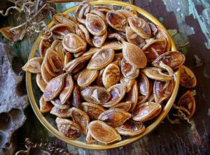 Kabocha squash seeds; these are not the same squash seeds as those recently revived by Native Americans.