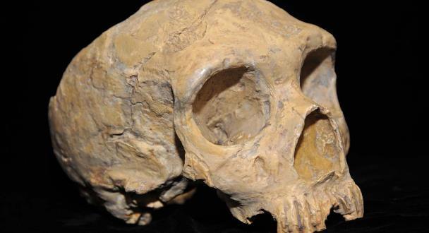 Prehistoric American Indian Skull Found in Kansas City