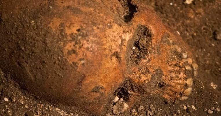 Skeletons Found Under a Florida Wine Shop May Be Some of America's First Colonists