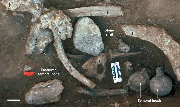 The incredible discovery places humans in California 130,000 years ago