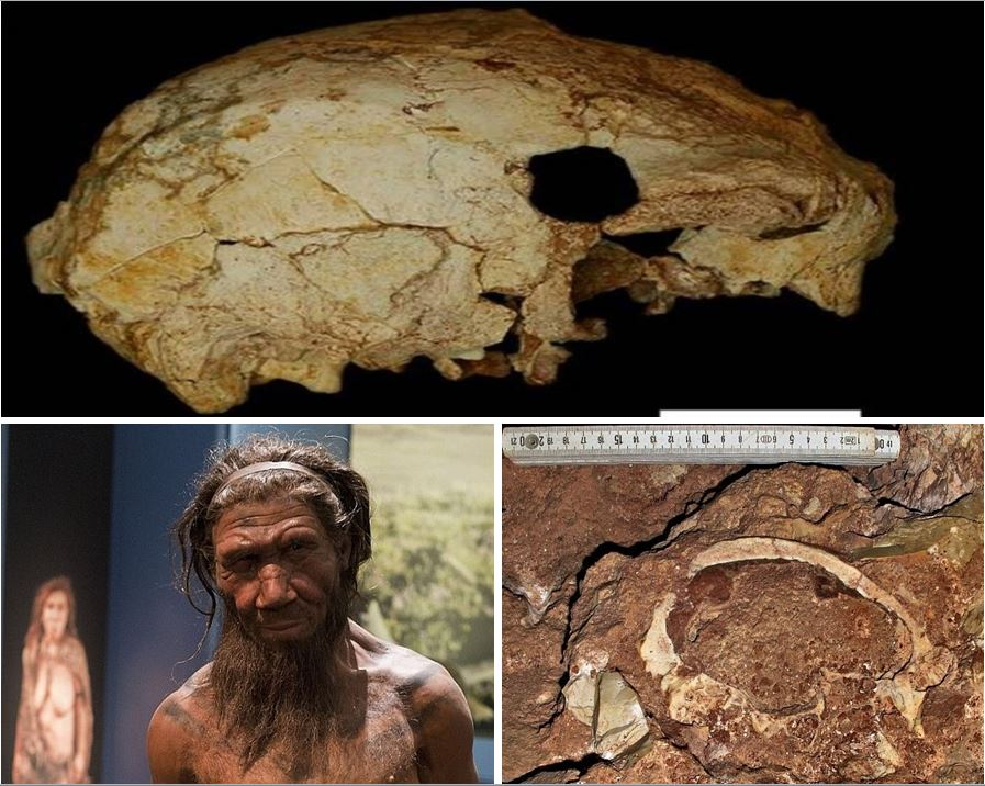 400,000-year-old skull of a mystery people with Neanderthal traits sheds light on how our ancient relatives evolved in Europe