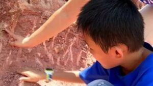 Third-grade Zhang Yangzhe (pictured) made the extraordinary discovery while playing on the embankment of Dong River in Heyuan, southern China's Guangdong Province