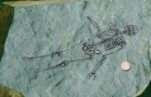 The second tiny skeleton was very well-preserved and showed quite a bit of detail.