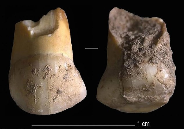 48,000-year-old tooth of Last Neanderthals unearthed in Italy