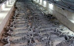 The Tomb of Duke Jing of Qi and his 600 Horses
