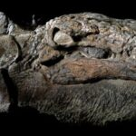 Archaeologists Discovered Dinosaur 'Mummy' Is So Well-Preserved It Even Has The Skin And Guts Intact