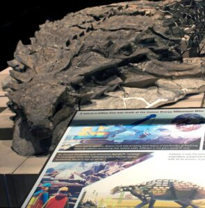 The nodasaurus fossil on display (Courtesy of Royal Tyrrell Museum, Drumheller, Canada)