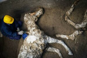 The remains of a military official's horse, discovered in Pompeii.