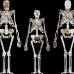 2,000,000-Year-Old Preserved Tissue May be Oldest Skin of Human Ancestor