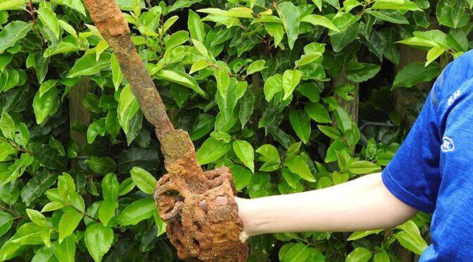 10-Year-Old Boy Finds Centuries-Old Sword in Northern Ireland