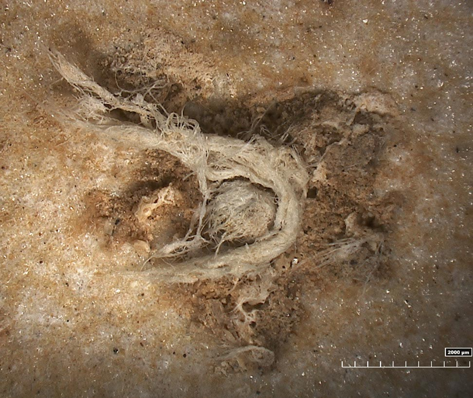 50,000 Year-Old String Shows Neanderthals Were Technologically Advanced