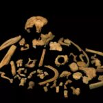 World's Oldest DNA Discovered In 800,000-year-old Cannibal's Tooth
