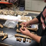 Horse remains reveal new insights into how indigenous peoples raised horses