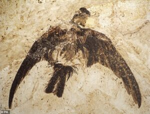 Plumage pattern revealed in 150 million-year-old bird