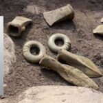 3,000-Year-Old Pressed Flower Found Inside Axe Handle at Bronze Age Burial Site