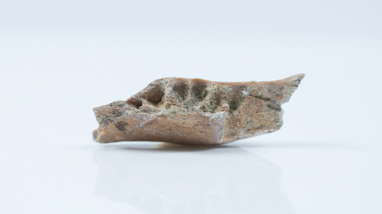 Fossils Suggest That Island Life Shrank Our 'Hobbit' Relatives