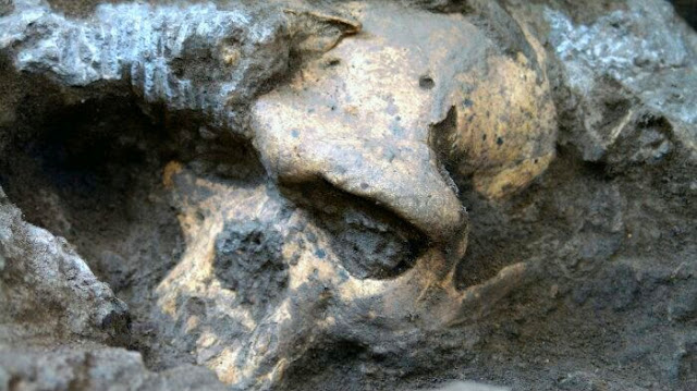 Skull 5 ― A million years old human skull forced scientists to rethink early human evolution