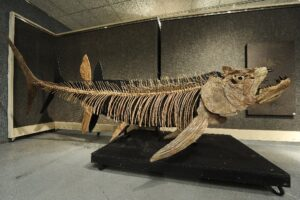 Fossil of giant 70 million-year-old fish found in Argentina